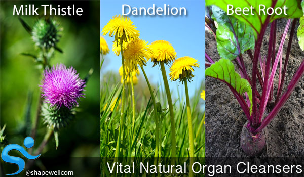 natural organ cleansers